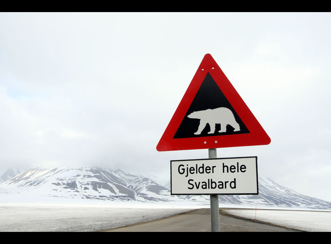 ANJCI ALL OVER | Svalbard