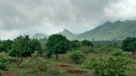 Sri farm scenery