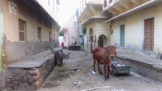 013_Pushkar