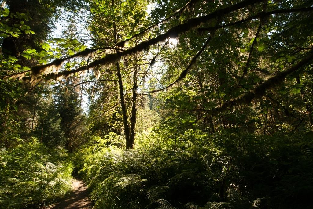 Quinault Rainforest
