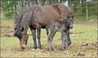 Mor och dotter ... förra våren