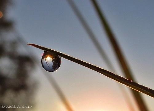 Soluppgång.