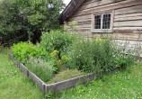 Ett vackert gammal hus med kryddträdgård passerade vi på väg till tåget,