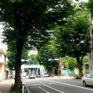 chatoan-photo10