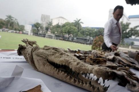 Salah satu barang bukti hasil kejahatan konservasi sumber daya alam dan ekosistemnya berupa offset kepala buaya sebelum dimusnahkan di Lapangan Bhayangkara, Jakarta, Selasa (2/2).