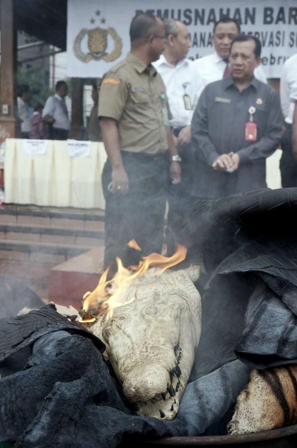 Salah Satu barang bukti hasil kejahatan konservasi sumber daya alam dan ekosistemnya berupa offset kepala buaya dimusnahkan di Lapangan Bhayangkara, Jakarta, Selasa (2/2)