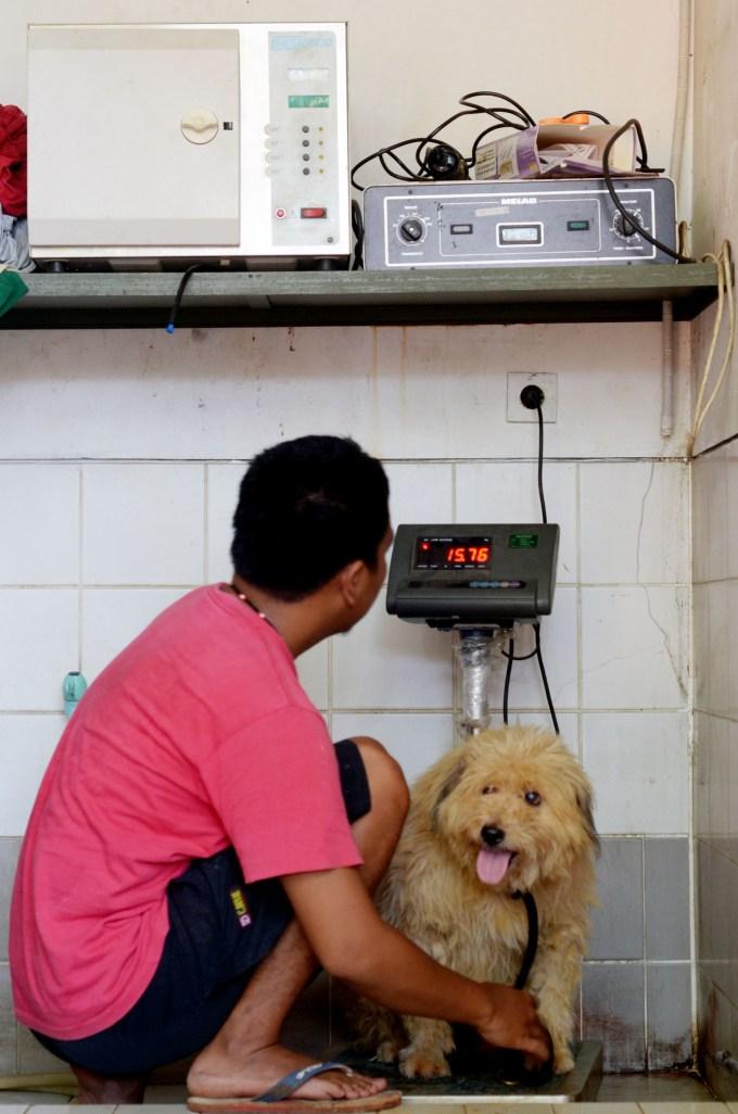 Rehabilitasi Anjing Liar-Aulia Rachman (9)