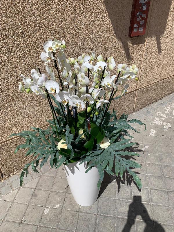 11 centro orquideas