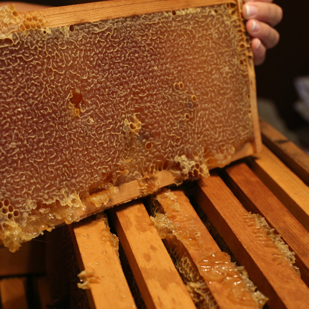 From Hive to Honey – Honey Harvesting by Hand