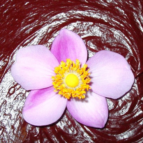 cropped-close-up-flower-cake