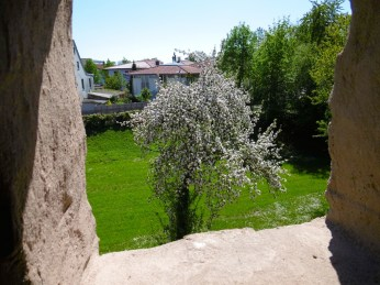 Obstbaumblüte im Stadtgraben