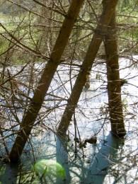 Moor-Bäume