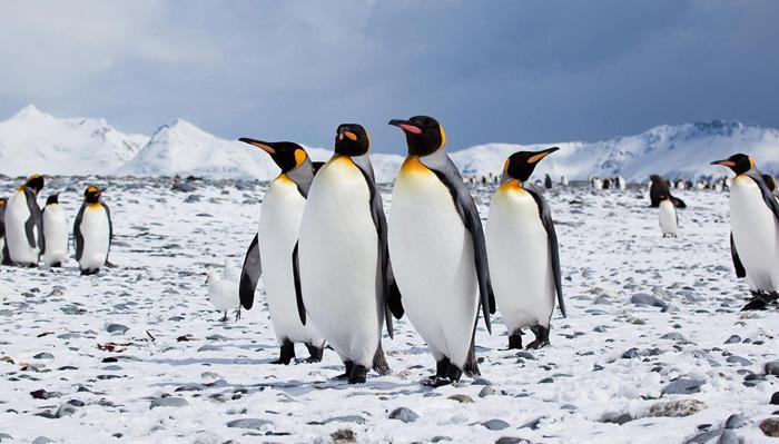 حيوانات تعيش في الصحراء الباردة
