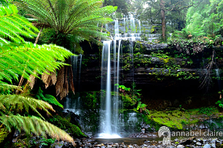 Image of Russell Falls taken on a chasing waterfalls trip in Tasmania