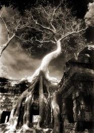 Twisted Tree at Ta Prohm