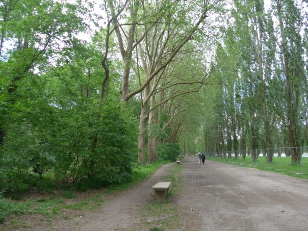 path beside the Grand Canal