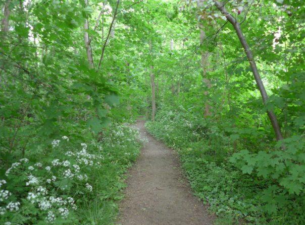 Woodland path, Parc de Sceaux