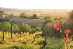 Monteriggioni sunset