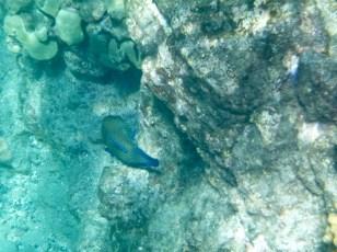 Hawaii Big Island - Snorkelling at 49 Black Sand Beach