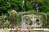 Madrid rose garden