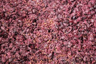 The remnants of the harvest at Corazon del Sol winery, Uco Valley, Argentina