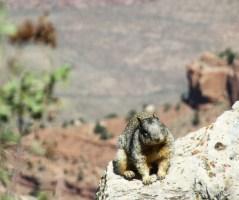Squirrel enjoying the sun on the rim