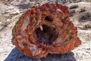 Petrified log up close