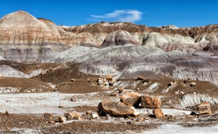 Petrified logs in Blue Forest trail