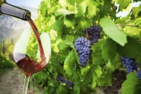 small-group-santorini-wine-tasting-and-vineyard-tour-in-santorini-146052