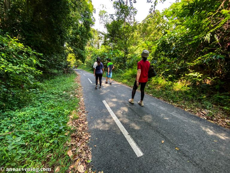 Four people walking on a tarmac road amidst jungle