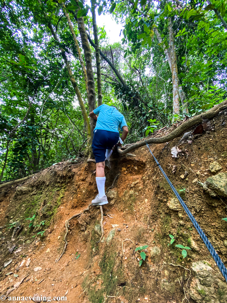 A man climbed up a soil and rooted path
