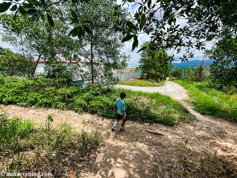 A blue-shirt man going down a shaded jungle hiking trail