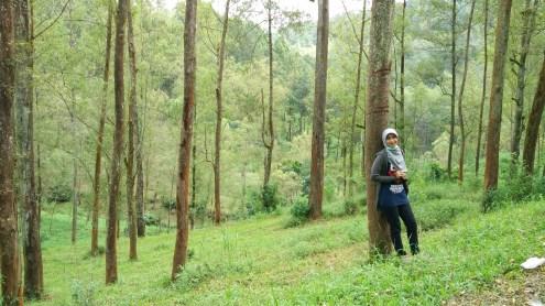 Hijaunya pepohonan
