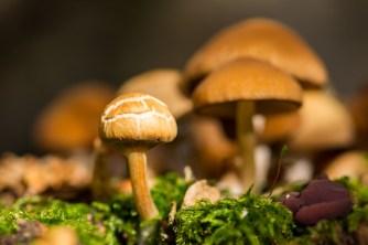 Little Mushroom in Autumn