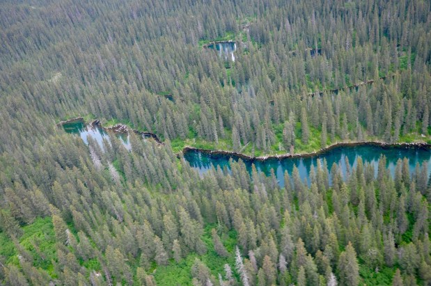Taiga forest of Lake Clark national park