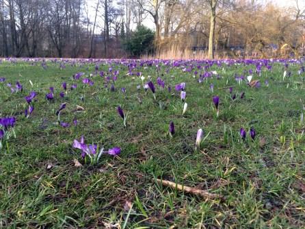 Spring blooms in Vondelpark