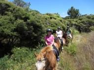 paardrijden in de bossen