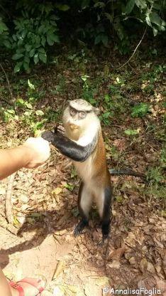 Santuario delle scimmie a Tafi Atome