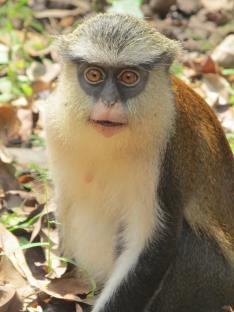 Santuario delle scimmie a Tafi Atome (photo by Flavia Santos)