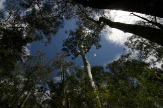 la foresta pluviale nella valle (foto: Anna Luciani)