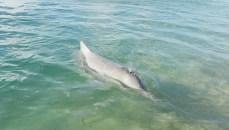 i delfini ad Amity (foto: Anna Luciani)