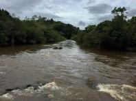 Mulgrave River. Il colore dell'acqua non è molto invitante ma dipende solo dalle abbondanti piogge, che trascinano nel fiume terra e foglie. Normalmente l'acqua è limpida e cristallina. (foto: Anna Luciani)