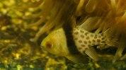 Aquasearch Aquarium (foto: Anna Luciani)