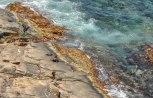 colonia di leoni marini all'Admirals Arch (foto: Anna Luciani)