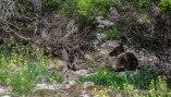 i canguri di Kangaro Island sono più piccoli e graziosi rispetto a quelli nel continente. Hanno un muso più affilato e un tipico colore cioccolato per mimetizzarsi meglio (foto: Anna Luciani)