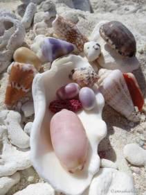 pastel shells