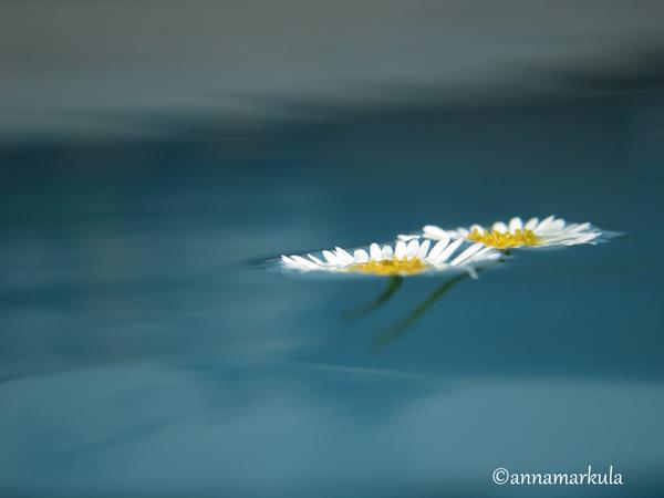 daisy_swirl