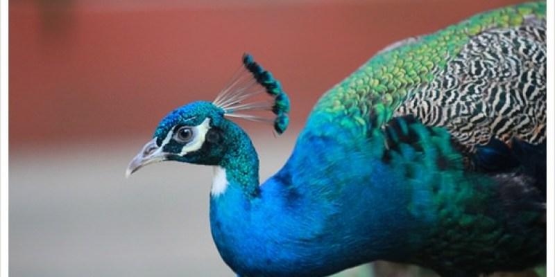 哈樂D‧蘭卡威.♫..·:*¨¨零距離的親密接觸@交怡鳥園Wildlife Park(文末送好禮)