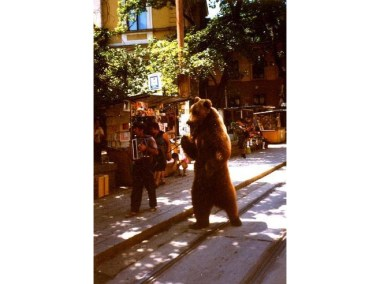 1746279-gipsies_and_bears-sofia