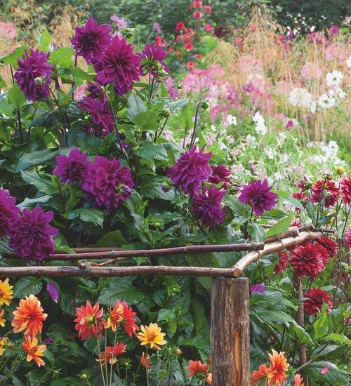 Sarah Raven hazel garden stakes